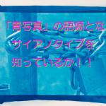 君は「青写真」の語源となったサイアノタイプを知っているか!!!!