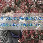 2015年 大阪城に梅の撮影にいきました!  有名な撮影スポットで春を感じよう。