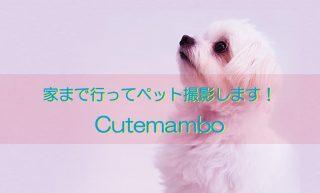 cutemambo